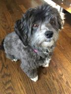 ROXY HAS BEEN ADOPTED - No longer available